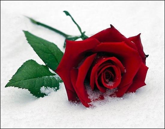 http://www.chitalnya.ru/upload/119/9137656446546.jpg