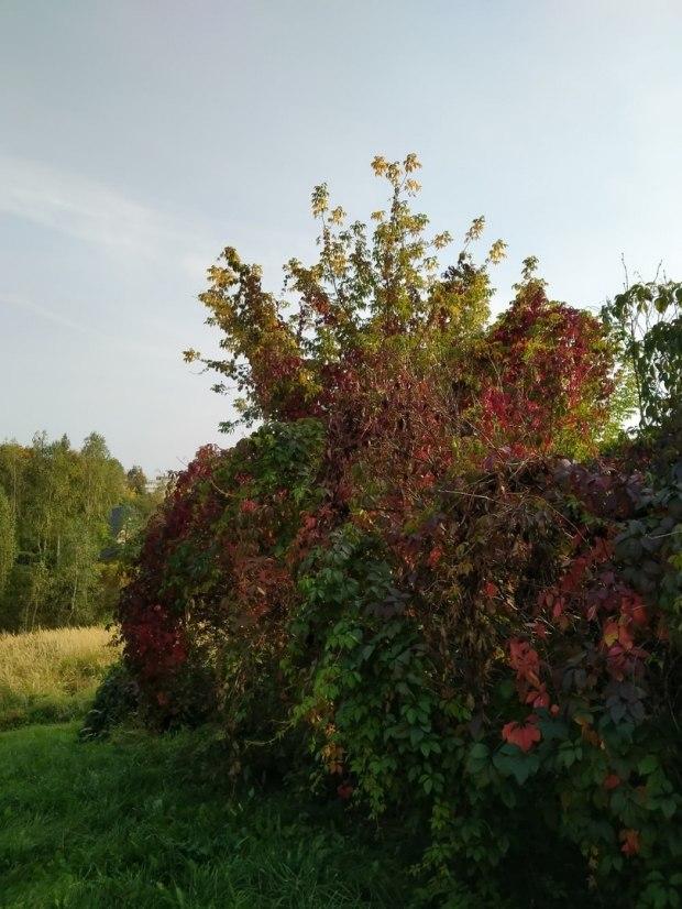Осени...