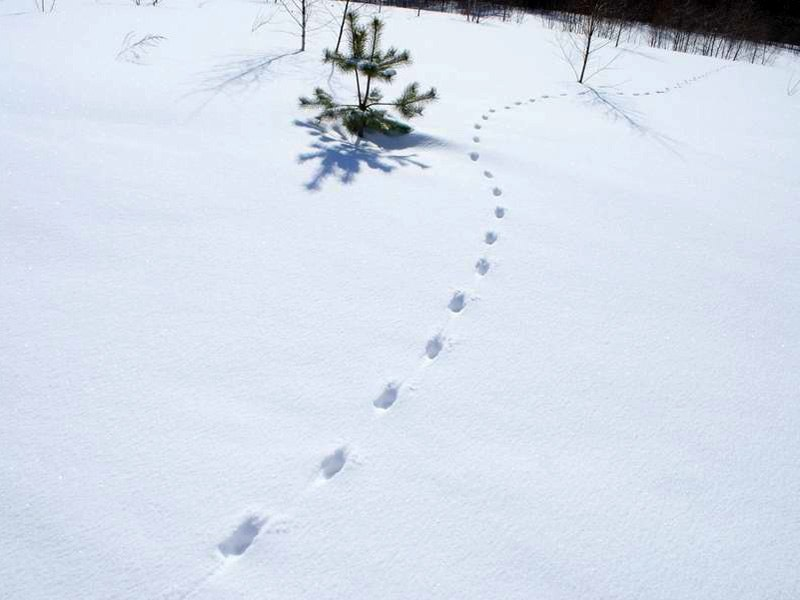 Рисунок шаги на снегу