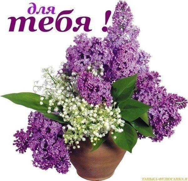 http://www.chitalnya.ru/upload/166/65415464481338.jpg