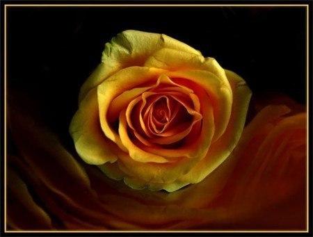 Песня роза красная роза белая