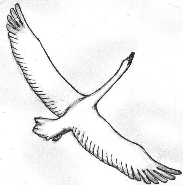 белые журавли раскраска предложено