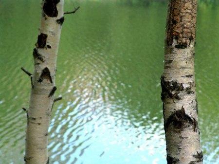 Зеленая прическа есенин стих
