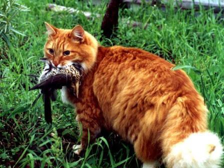 Картинки по запросу рыжий кот