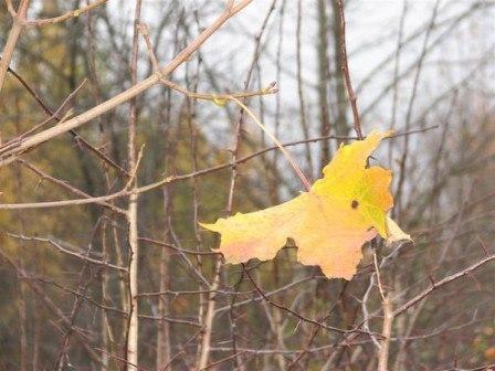 Последний лист осенний стихи
