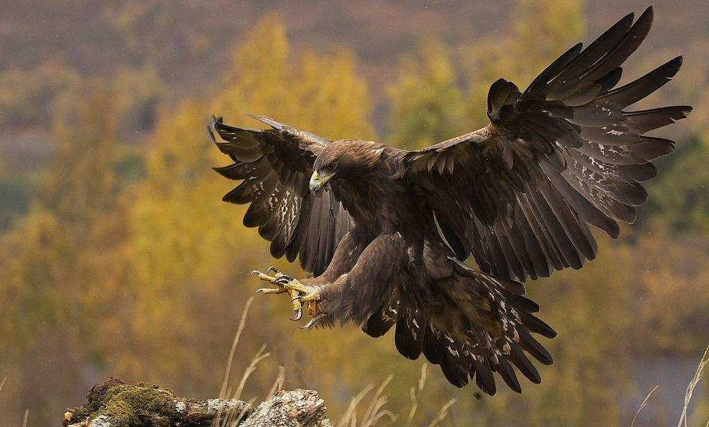 печати картинка русского орла спама передадим ваш