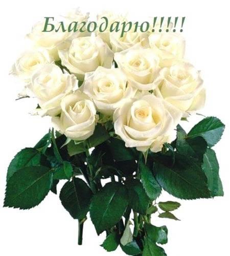 Кончил в sasha rose