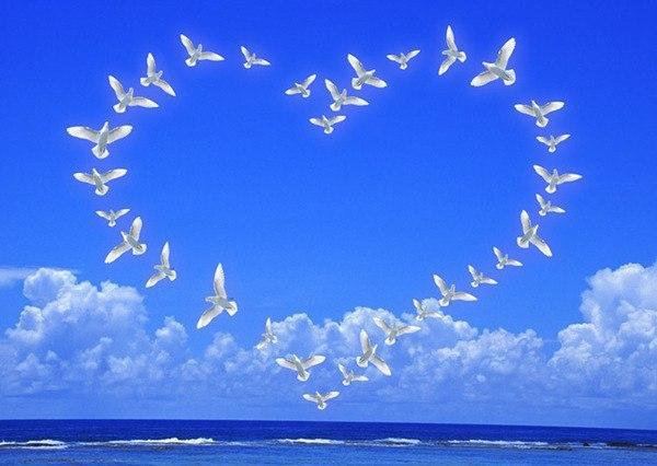 к чему снится стая птиц над головой суд
