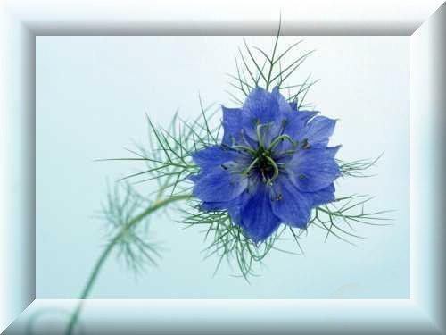 Картинки на телефон цветы и растения