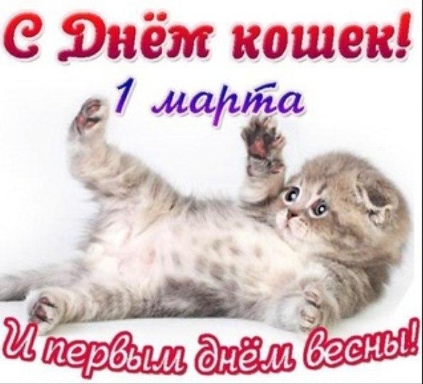 Поздравление с днём кошки