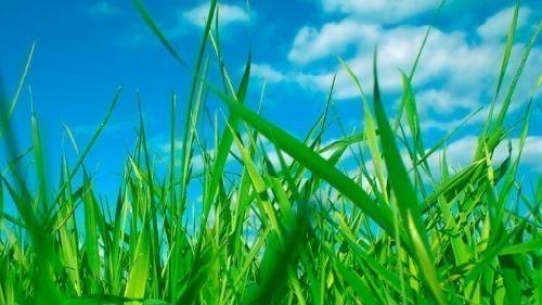 Трава у дома - текст песни (Земля в иллюминаторе)