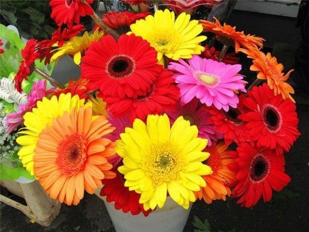 Фото цветы герберы для девушки