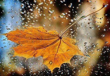 Бесплатно Скачать Песню Подожди Дожди