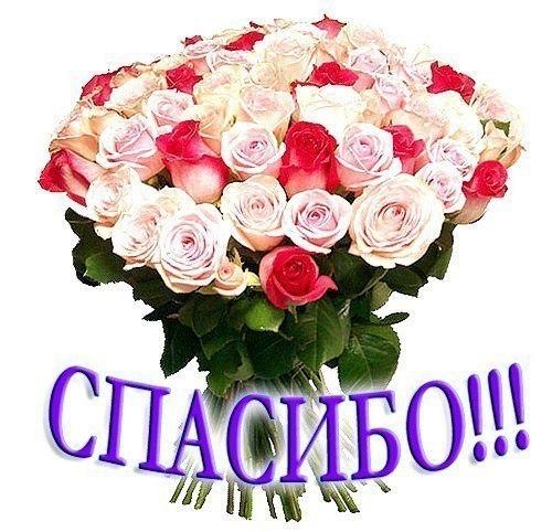цветы фото спасибо