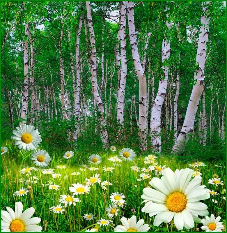 природа картинки красивые лето анимация удивительный