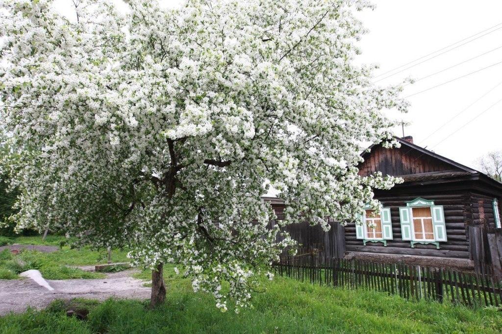 взобраться кваркуш фото яблоня возле дома меня это