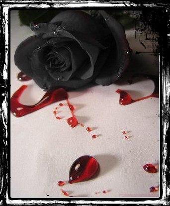 Черная роза скачать бесплатно песню