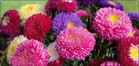 осенние цветы текст песни