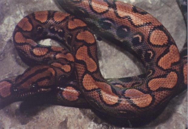 Рассказ как змея поимела меня фото 29-375