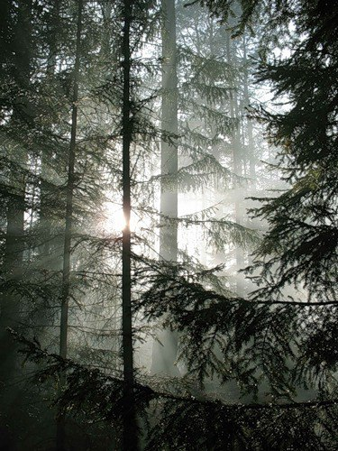 3. Поэма начиналась лесом...