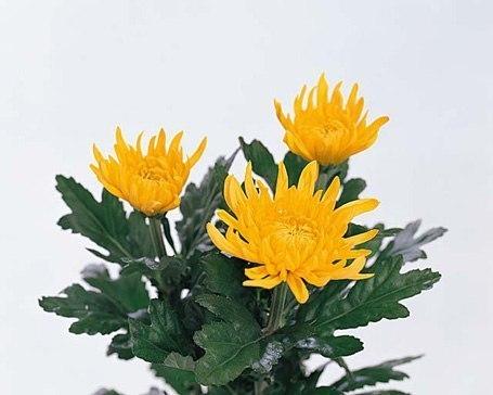 Стих про осенние цветы коротко