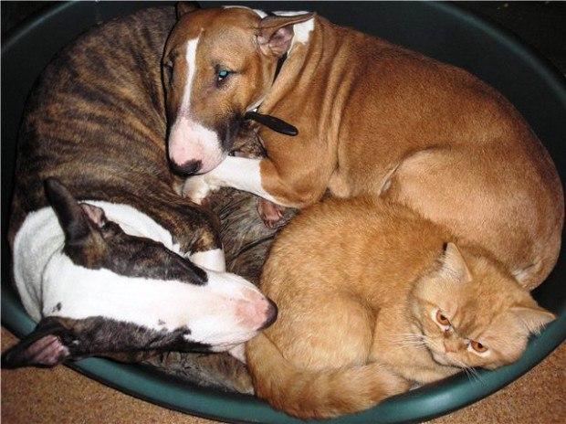 Собака и кошка смешные фото с надписью картинки, письма