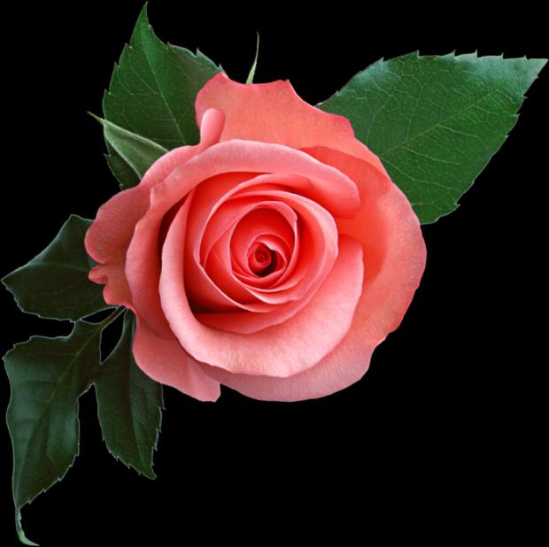 С днем рождения картинки анимации с розами