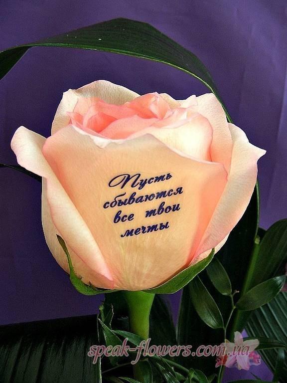 Картинки розы с надписью люблю
