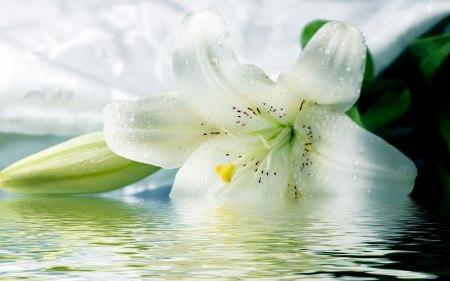 Белую лилию мне подари