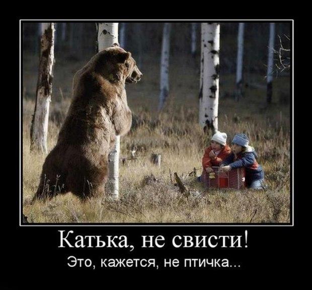 Картинка с медведями сегодня не пьем