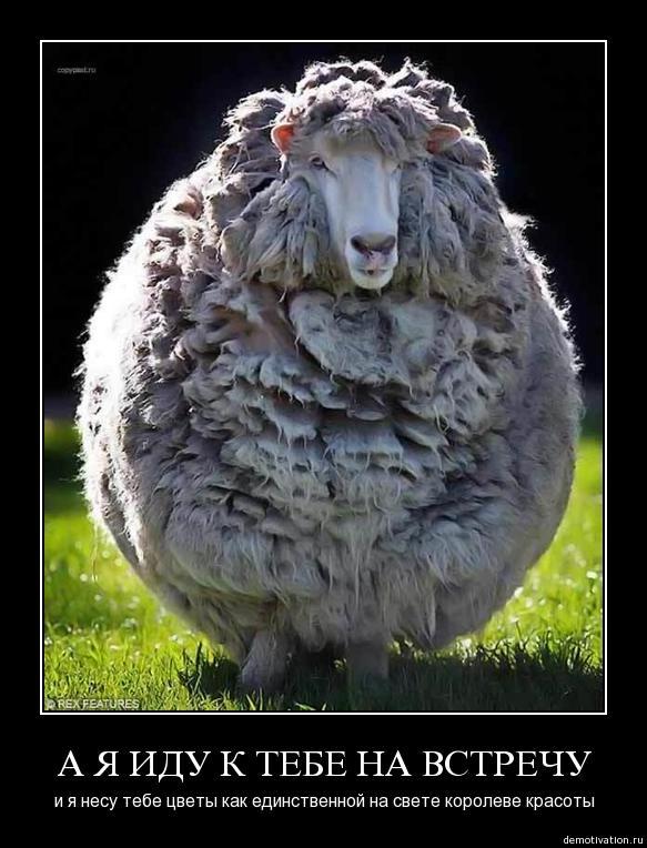 алюминиевые демотиваторы про овец всего при лечении