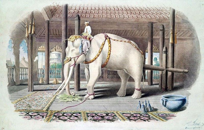 Картинки по запросу Песня про белого слона