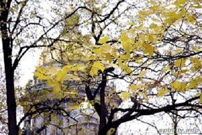 Рецензия увядшей листве