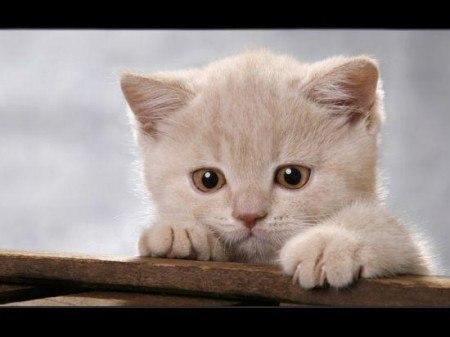 Рассказ про кота грустный