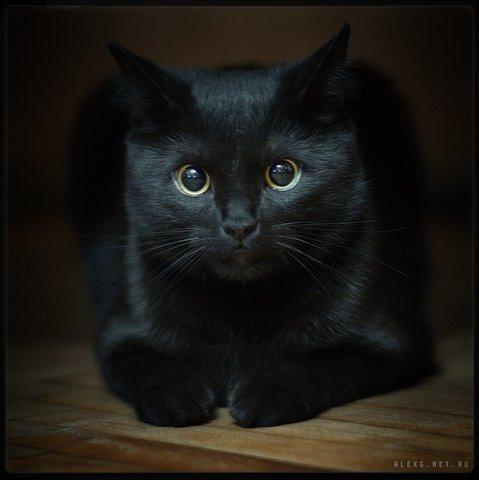 Черный кот с розой