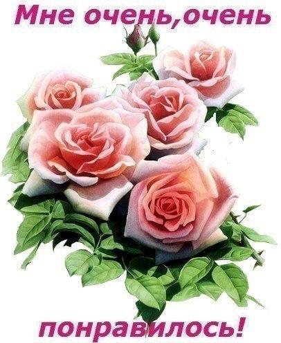 Картинки по запросу за красивые песни цветы