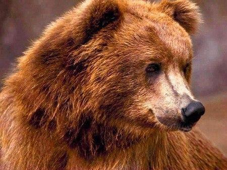 Про медведя