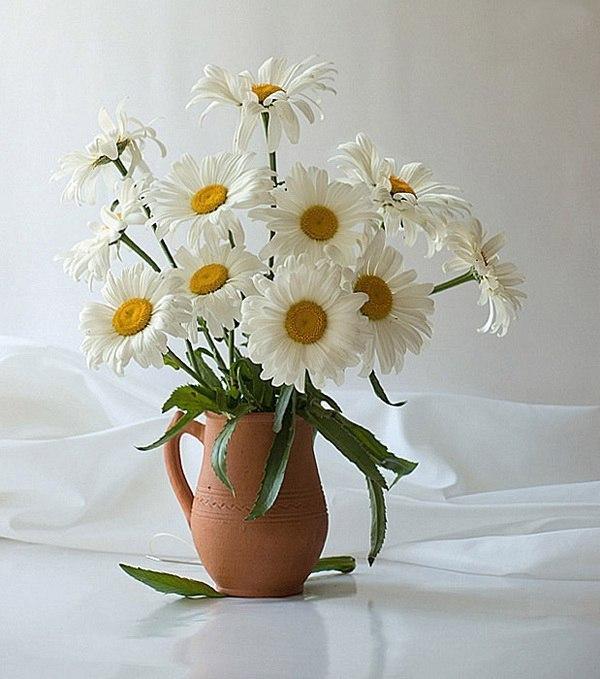 понятием ваза с ромашками картинки Московская область, Люберецкий