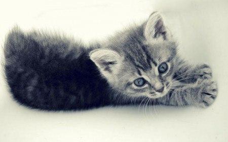 Загадка стих про кота
