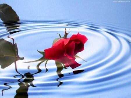 Стих о воде и о росе