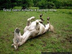 фото сивая кобыла