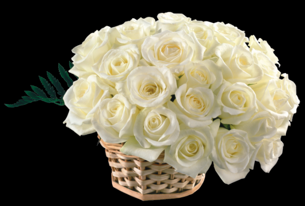 Белые розы открытка с др, собака