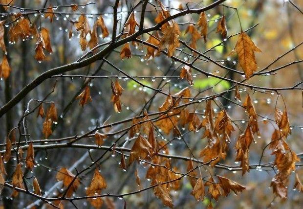 Красивые фотографии дождя 35 фото  Триникси