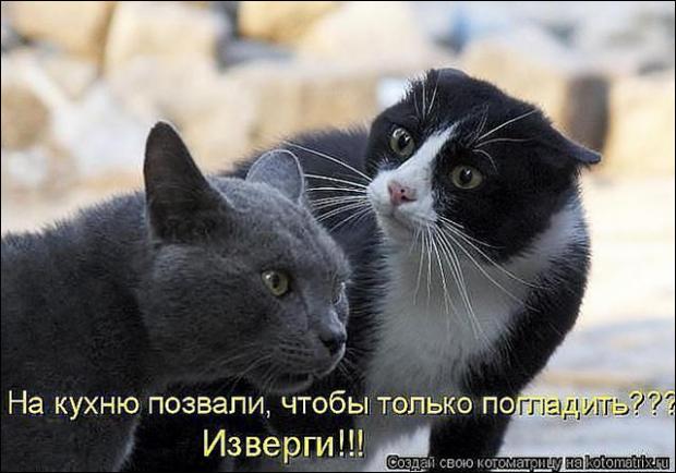 Строение кошек и котов!
