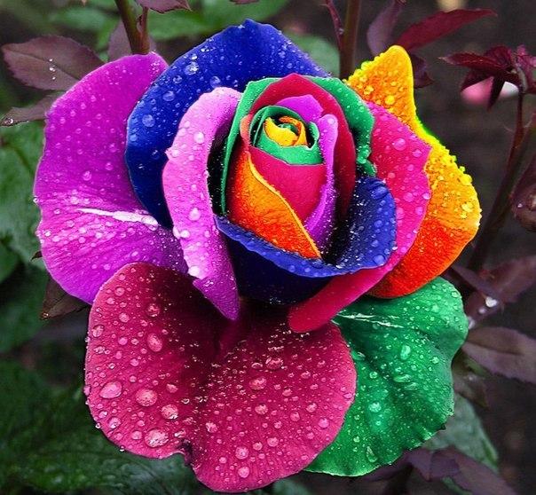 http://www.chitalnya.ru/upload2/555/0f847b55e090059490988e4d9d7a8fd3.jpg