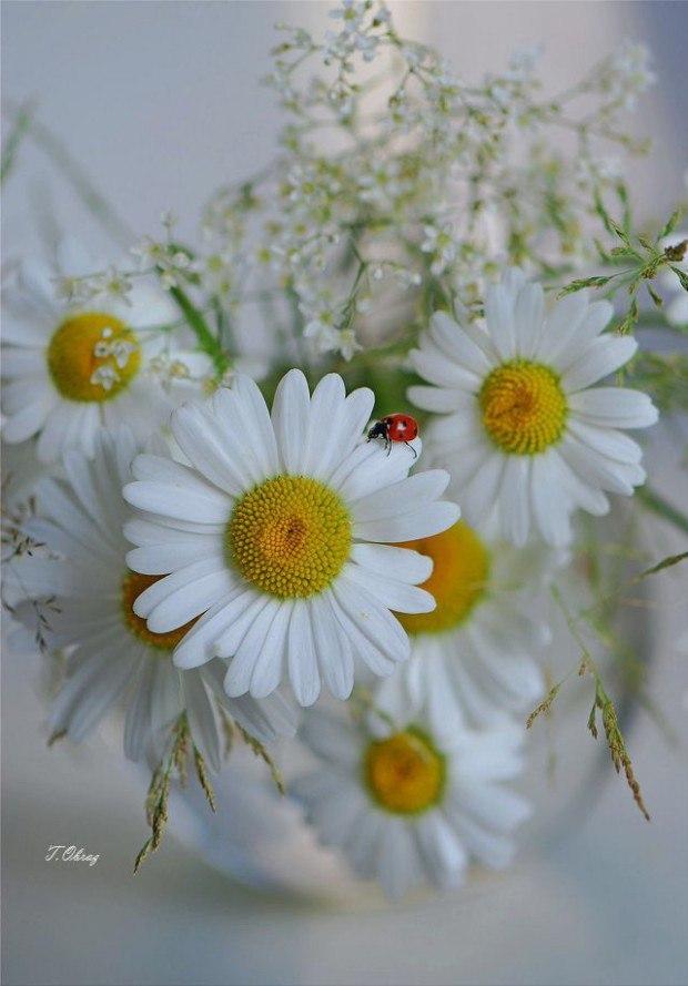 Картинки с днем рождения девушке цветы с пожеланиями ромашки анимационные
