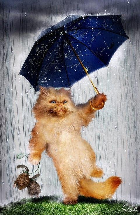 Дождливая осень прикольные картинки