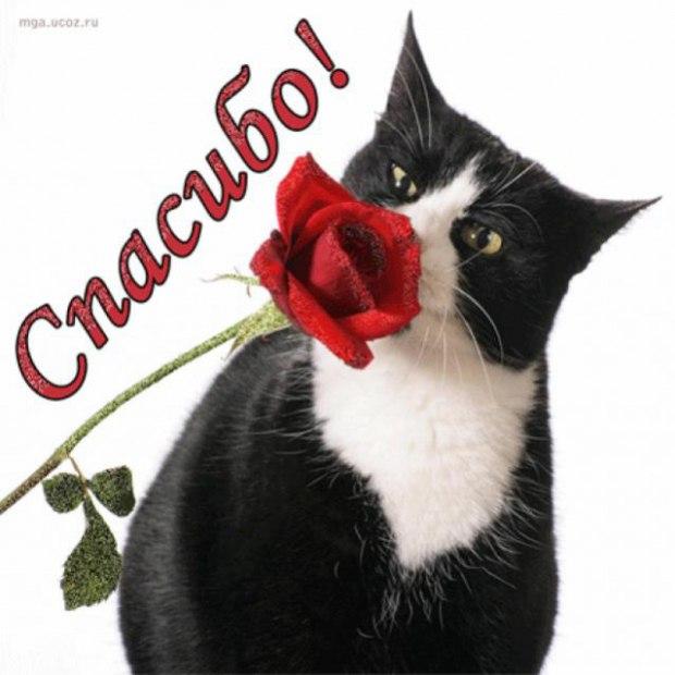 Открытки спасибо с котиком, море картинки хорошего