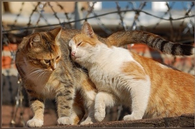 Днем рождения, открытка как кошка любит кота