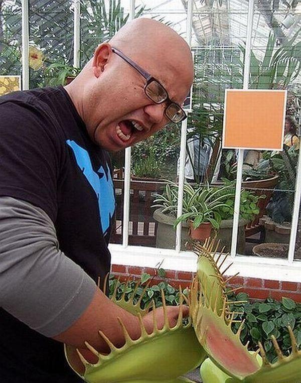 Выращивание хищных растений 15